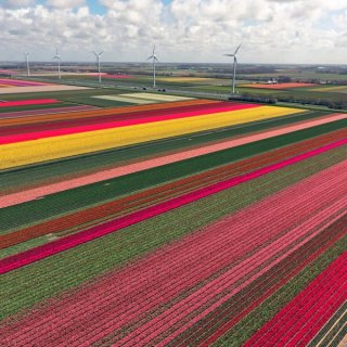 Tulpenfelder in Nordholland