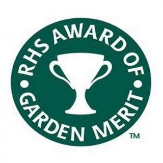Logo des Award of Garden Merit der RHS