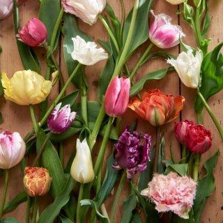 Tulpen Vielfalt