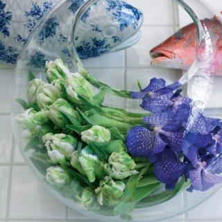 Viridiflora-Tulpen