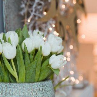 Tulpenstrauß zur Weihnachtszeit