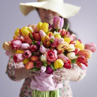Tulpen Mix