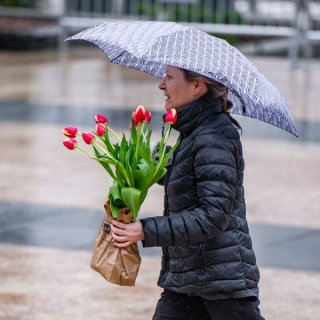 Tulpen gegen den Winter-Blues