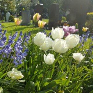 Grabbepflanzung mit Zwiebelblumen