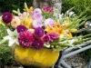 Dahlien, Lilien und Gladiolen