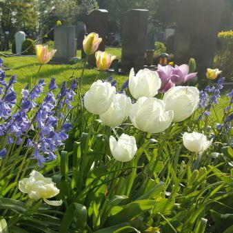 grabbepflanzung mit bodendeckern