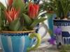 Traubenhyazinten und Tulpen