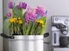 Krokusse, Tulpen und Hyazinthen