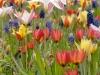 Blumenzwiebelmischung