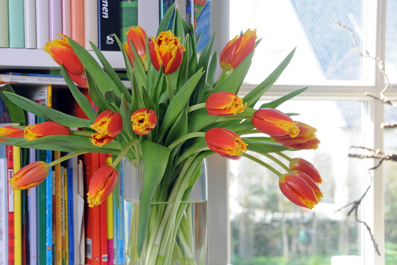 Darum Wachsen Tulpen In Der Vase Weiter Zwiebelhaft