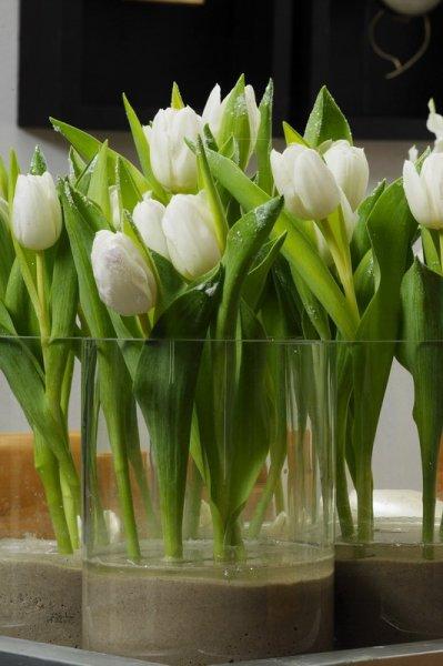 tulpen wieviel wasser in die vase zwiebelhaft. Black Bedroom Furniture Sets. Home Design Ideas